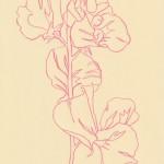 Ellen Williams Sweet Pea VII Wychwood Art
