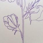 Ellen Williams Swet Pea V Wychwood Art close up