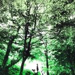 woodland_walks_trees_dog_walking_green_screenprint_katie_edwards_illustration_art