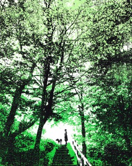 woodland_walks_trees_dog_walking_green_screenprint_katie_edwards_illustration_art