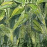 Jane Peart Pudi Rice Terraces detail3Wychwood Art