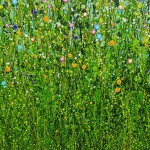 Lucy_Moore_Confetti_summer_Meadows_close_up (2)