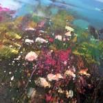 Rachel-Painter—Be-Free–closeup3