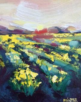 Rachel Painter - Wings Of Dawn Study - Yellow Field Daffodil - Cornwall- Wychwood Art
