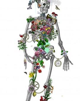 Admolduskaltuverda-StillSkeletonwhite1500pix_744x