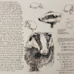 Will Taylor  Badger Studies  Main  Wychwood Art