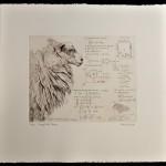 Will Taylor  Sheep Field Theory  Sheet  Wychwood Art