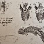 Will Taylor  The Honey Bee  Crop3  Wychwood Art