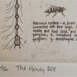 Will Taylor  The Honey Bee  Edition  Wychwood Art