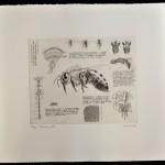 Will Taylor  The Honey Bee  Sheet  Wychwood Art