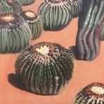 Cactus Madness, Musee de la Palmeraie, Morocco detail 2