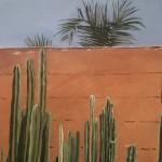 Cactus Madness, Musee de la Palmeraie, Morocco detail 4