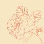 Ellen Williams Rose X Wychwood Art