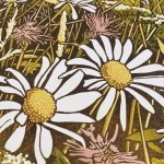 wildflowers i – Susan Noble – close up flowers