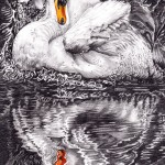 Beauty & reflection USE-216fc77b