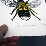 Vicky Oldfield, Tree Bumble bee, Screen print, Contemporary art, bee picture, paper -f3ec3946