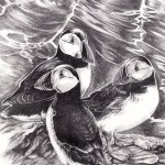 Puffins USE-c02d10d4