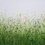 Serenity_Meadow_#2-09539758