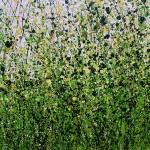 Serenity_Meadow_#2 (6)-45744093