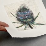 Vicky Oldfield, Thistle Bud,  Wychwood Art, Original Print,  Royal Academy Summer Exhibition Artist, p jpeg-560431e2