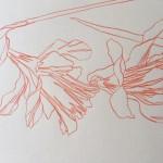 Ellen Williams Daffodil 1 Wychwood-78e43ae2