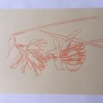 Ellen Williams Daffodil 1 Wychwood Art-acfb5344