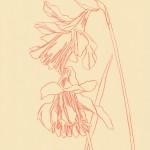 Ellen Williams Daffodil 1 Wychwood Art-b82f4644