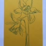 Ellen Williams Daffodil 2 Wychwood -9a62be3e
