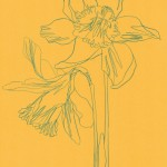 Ellen Williams Daffodil 2 Wychwood Art-2a150052