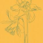 Ellen Williams Daffodil 2 Wychwood Art-2a150052
