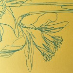 Ellen Williams Daffodil 2 Wychwood Art-2ab112f9