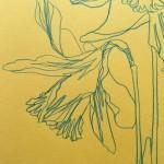 Ellen Williams Daffodil 2 Wychwood Art-2ab112f9