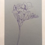 Ellen Williams Freesia 1 Wychwood Art -1d2505b7