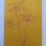 Ellen Williams Hellebore 1 Wychwood-f1048f70