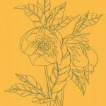 Ellen Williams Hellebore 3 Wychwood Art-4867e68b