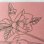 Ellen Williams Hellebore 4 Wychwood-c1ea870b