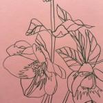 Ellen Williams Hellebore4 Wychwood Art-71a44e97