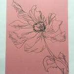 Ellen Williams Icelandic Poppy 1 Wychwood-a29f788d