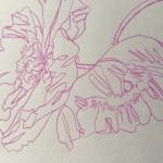 Ellen Williams Icelandic Poppy 2 Wychwood Art-42f985f0