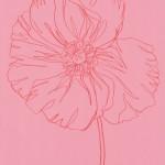 Ellen Williams Icelandic Poppy 3 Wychwood Art-eace917d