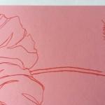 Ellen Williams Icelandic Poppy 3 Wychwood-f74617bc