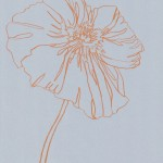 Ellen Williams Icelandic Poppy 4 Wychwood Art-1465e06d