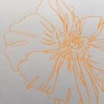 Ellen Williams Icelandic Poppy 4 Wychwood Art-c7ff0ae6