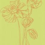 Ellen Williams Icelandic Poppy 5 Wychwood Art-ba5b8fd7