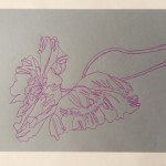 Ellen Williams Icelandic Poppy2 Wychwood Art-ea53b027