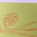 Ellen Williams Icelandic Poppy5 Wychwood Art-dee41f55