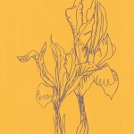 Ellen Williams Iris 1 Wychwood Art-70c7e32a
