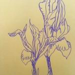 Ellen Williams Iris 1 Wychwood Art-7485c370