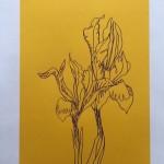 Ellen Williams Iris 1 Wychwood-d11225b8