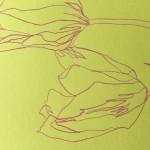 Ellen Williams Tulip 1 Wychwood Art-9558eb22